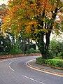 Tree, Marlborough Park South - geograph.org.uk - 1031945.jpg