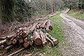 Tree trunks in Sowdley Wood - geograph.org.uk - 163217.jpg
