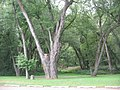 Trees in Milton State Park.JPG