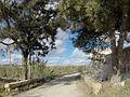 Triq Tal-Virtu, Ir-Rabat, Malta - panoramio (27).jpg