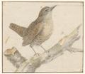 Troglodytes europaeus - 1753-1834 - Print - Iconographia Zoologica - Special Collections University of Amsterdam - UBA01 IZA1000226.tif