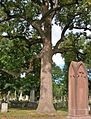 Tulip Tree and Gravestones in Old North Cemetery, Hartford, CT - September 24, 2014.jpg