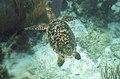 Turtle 4 (4385892408).jpg