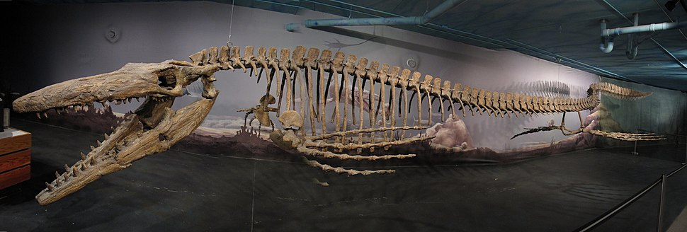 Tylosaurus Bruce