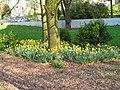 UCC, Cork, 12.4.14 - panoramio (11).jpg