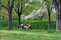 USA - Constitution Gardens.JPG