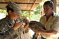 US Navy 100908-N-7680E-261 Army Capt. Rebecca Carden vaccinates a Guatemalan man's chicken during a veterinary mission.jpg