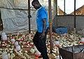 Un fermier au milieu de ses poussins.jpg