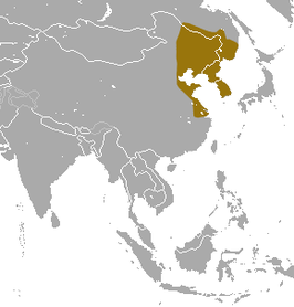 Ussuri White-toothed Shrew area.png