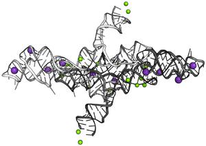 VS ribozyme - Image: VS ribozyme dimer 4r 4v