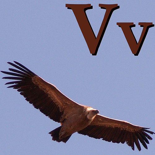 Postavi slova u slikama 500px-V_is_for_Vulture