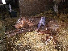 Ethical Dog Breeding For Profit