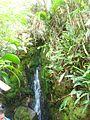 Vegetación Roraima.jpg