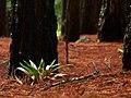 Vegetación de la Auyamala.JPG