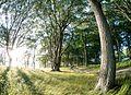 Vejlø skov - panoramio (4).jpg