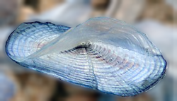 Long Island Medusa Shark Komplett Longboard