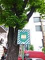 Volodymyrska street trees (May 2019).jpg