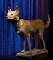 WLANL - Pachango - Sieboldhuis - Siebolds hondje.jpg