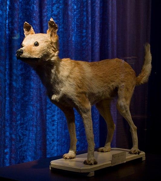 File:WLANL - Pachango - Sieboldhuis - Siebolds hondje.jpg