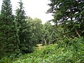 Wakehurst Place woodland walk - geograph.org.uk - 955429.jpg