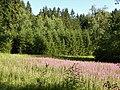 Waldwiese, Geyersberg.jpg