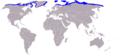 Walross-Odobenus rosmarus-World.png