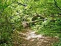 Wanderweg zur Bertaburg - panoramio (1).jpg