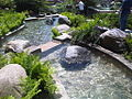Waterfall into pond.jpg