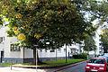 Weiße Stadt - Baudenkmal Galileistr. 1-15.jpg