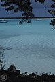 West Bay sand from Conocarpus on Ironshore 1979 (27093331579).jpg
