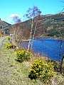 Western Shore of Loch Lubnaig - geograph.org.uk - 394819.jpg