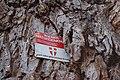 Wiener Naturdenkmal 219 - Bruchweide (Döbling) m.jpg