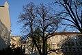Wiener Naturdenkmal 456 - Sommerlinde (Währing) d.JPG
