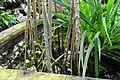 Wikipedia 13. Fotoworkshop Botanischer Garten Erlangen 2013 by-RaBoe 144.jpg