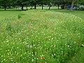 Wildflower meadow in Manor Park (geograph 3015138).jpg