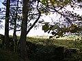 Woodland ,Conisber - geograph.org.uk - 264047.jpg