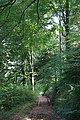Woodland Path - geograph.org.uk - 983354.jpg