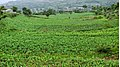 Woraf-IBB - panoramio.jpg