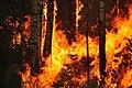 Yugansky nature reserve fire (7938012202).jpg