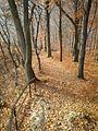 Zielony szlak w Ojcowskim Parku Narodowym - panoramio.jpg
