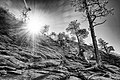 Zion National Park (15371340741).jpg