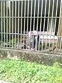 Zoo Dois Irmãos by SandraSB (21).jpg