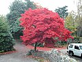 """Autumn Leaves"" - geograph.org.uk - 60824.jpg"