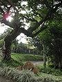 'Bunisari Lendra' Guesthouse - panoramio.jpg