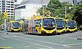 'Go Wellington'-trolley buses parked at the Lambton Interchange.jpg