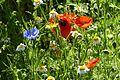 'Grow wild' Flower seeds - Flickr - gailhampshire (1).jpg