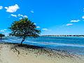 Árvore em Galinhos, RN, Brasil.jpg