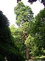Épernay - jardin d'horticulture (06).JPG