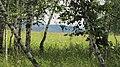 Березки - panoramio (4).jpg