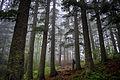 Во шумата на Баба 2015.jpg